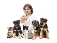 Как выбрать хорошую ветеринарную клинику
