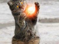Магия кошек и их энергетика