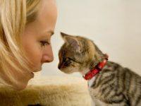 Почему коты смотрят пристально в глаза