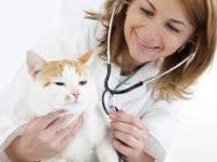 Выбор ветеринарной клиники1