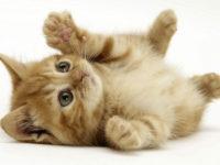 Что делать, если ваша кошка не хочет кушать