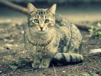 кот с улицы