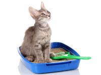 Выбор наполнителя и кошачьего лотка
