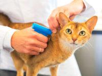 5 причин чипировать кошку